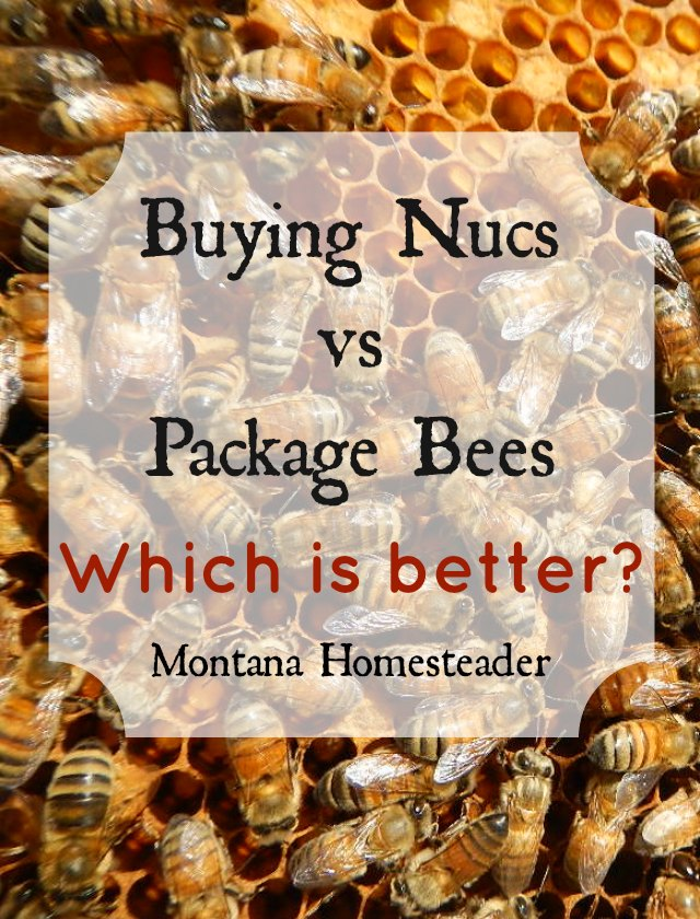 Buying nucs vs package bees- which is better? | Montana Homesteader