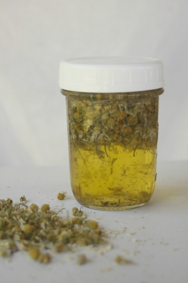 How to make and use Chamomile Oil | Montana Homesteader