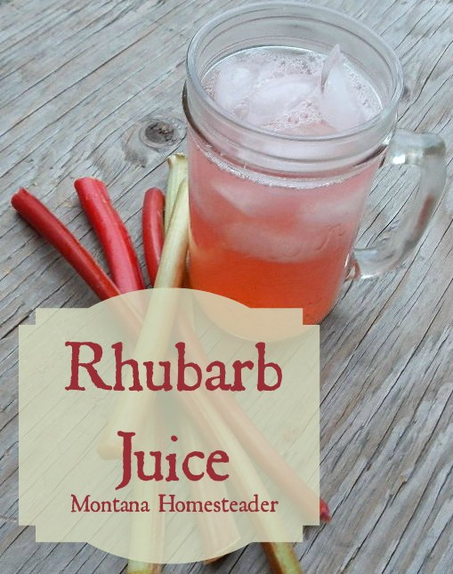Rhubarb juice recipe an easy and delicious way to use rhubarb | Montana Homesteader
