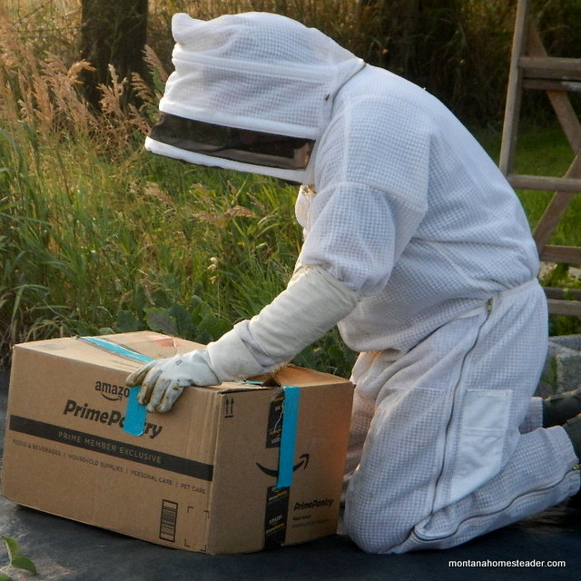 Capturing a honey bee swarm and transporting it back home   Montana Homesteader
