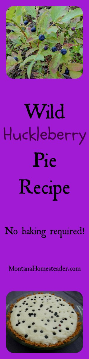 Wild huckleberry pie recipe | Montana Homesteader