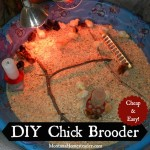DIY Chick Brooder