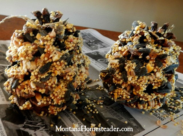How to make a pine cone bird feeder | Montana Homesteader