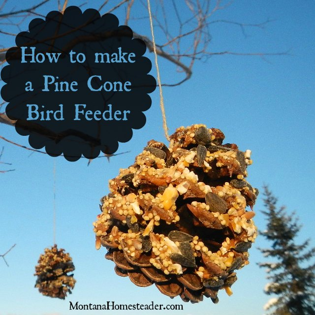 How to make an all natural Pine Cone Bird Feeder the perfect pine cone craft for a cold winter day |Montana Homesteader