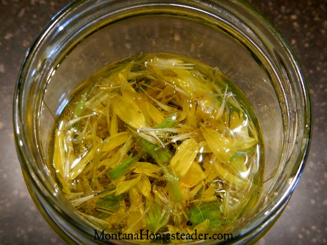 How to make an arnica herb infused oil | Montana Homesteader