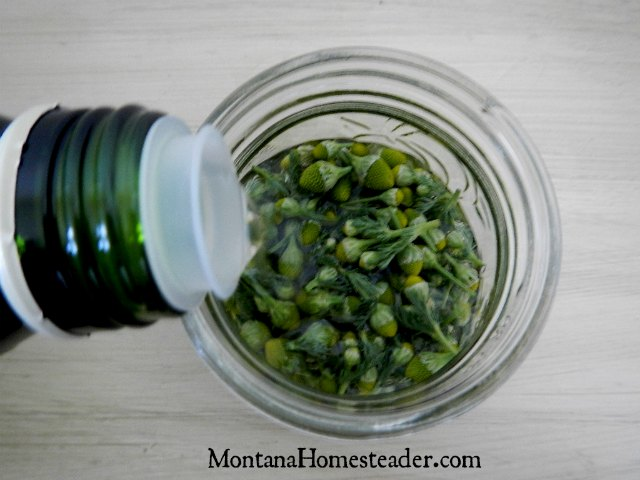 How to make a homemade herb infused oil | Montana Homesteader