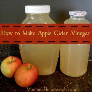 How to make apple cider vinegar | Montana Homesteader