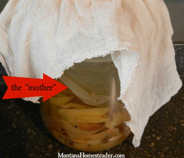 How to make homemade fermented apple cider vinegar ACV | Montana Homesteader