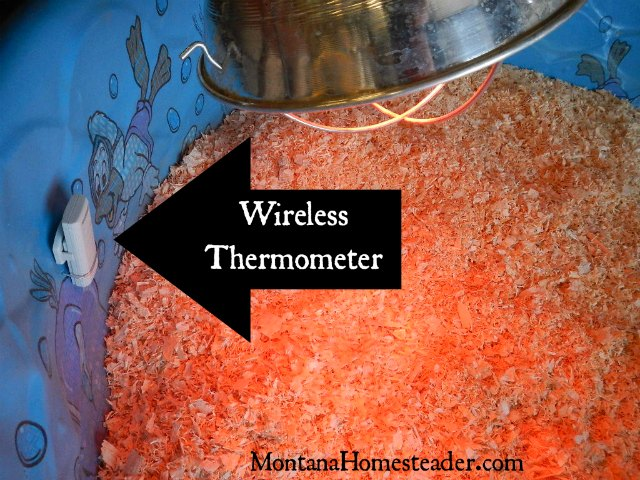 How to track and regulate the heat in a chick brooder | Montana Homesteader