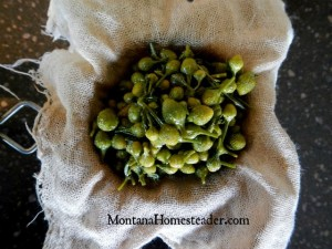 Making and straining an herb infused oil | Montana Homesteader
