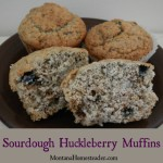 Sourdough Huckleberry Muffins