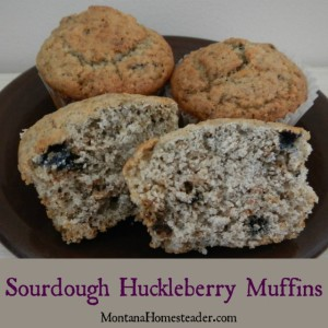 Sourdough Huckleberry Muffins Recipe | Montana Homesteader
