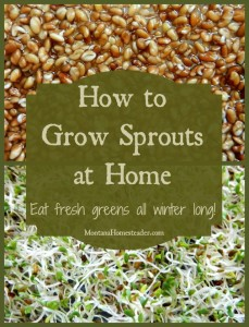 How to grow sprouts at home and eat fresh homegrown greens all winter long Montana Homesteader