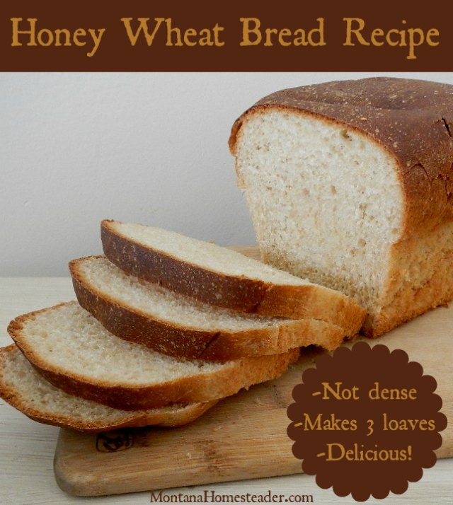 Our favorite honey wheat bread recipe makes 3 loaves | Montana Homesteader