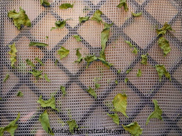 2 ways to preserve spinach by freezing and dehydrating | Montana Homesteader