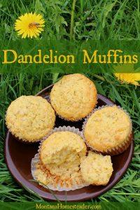 Dandelion muffins recipe Montana Homesteader
