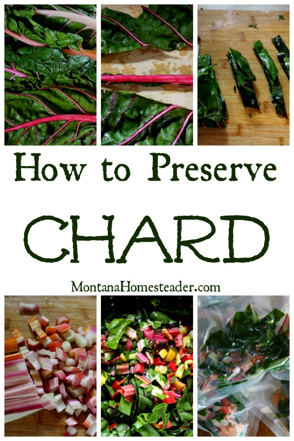 chard leaves and stems being choppeed and blanched to preserve them by freezing in vaccum sealed bags