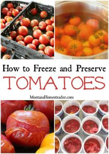 crates of tomatoes, tomatoes in boiling water, tomatoes with skin peeling and freezer containers of peeled and chopped tomatoes ready to freeze and preserve