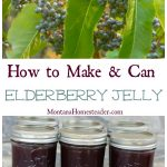 How to make and can elderberry jelly