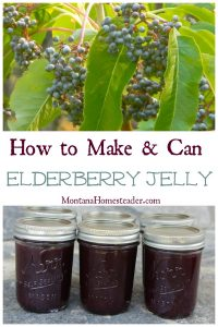 How to make and can elderberry jelly includes a picture of wild elderberries on the bush in the mountains and a picture of jars of homemade canned elderberry jelly