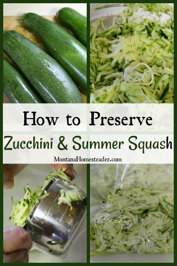 Whole zucchini being shredded in a food processor then packed into food storage bags to be vaccuum sealed and preserved