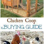 Chicken Coop Buying Guide