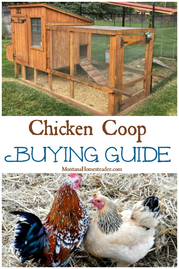 Chicken Coop buying guide with a picture of chickens and a chicken coop with attached run and exterior nest boxes