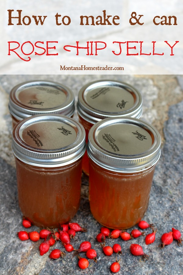 Jars of homemade canned rose hip jelly and fresh wild rose hips