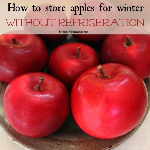 Storing apples long term for winter without refrigeration