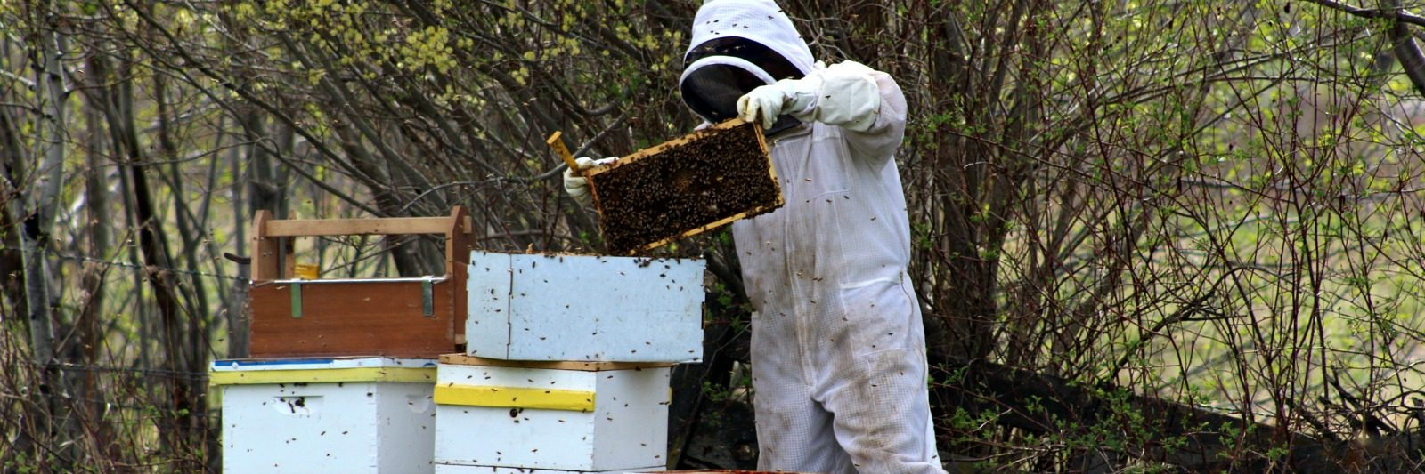 Natural Beekeeping posts Montana Homesteader