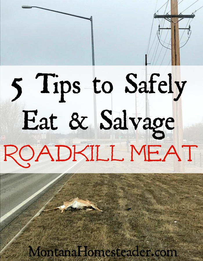 5 tips to safely eat and salvage roadkill meat